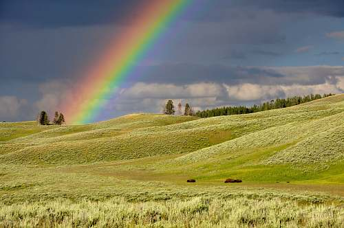 rainbow rainbow near green grass ranges yellowstone national park