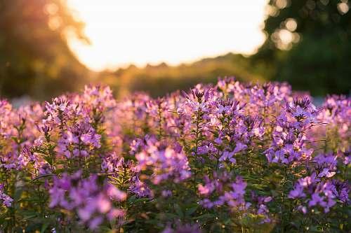plant purple petaled flowers selective focus photography lexington