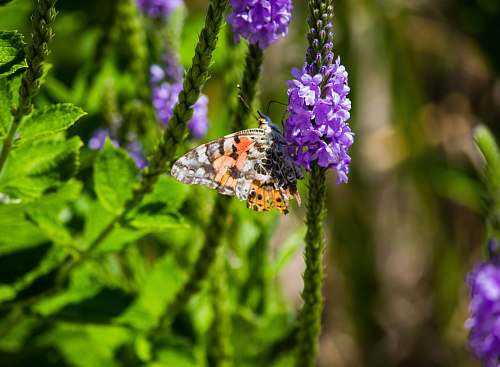 plant white, yellow, and black butterfly close-up photography purple