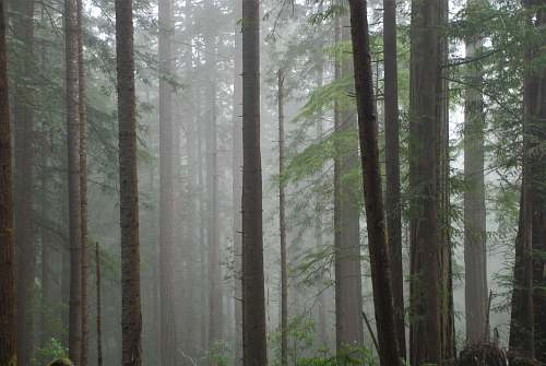 nature forest covered with fog flora
