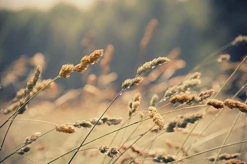 plant photo of green leaf plant wheat