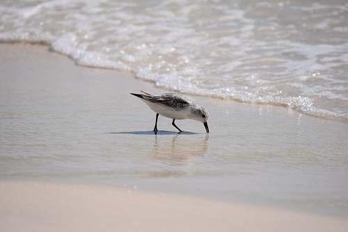 animal seagull on the shore bird