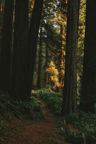 tree landscape photography of forest redwood