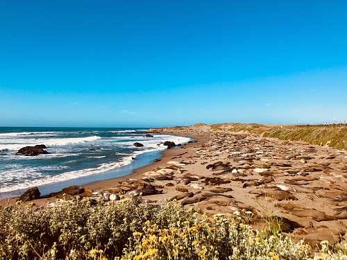 promontory seashore under clear blue sky ocean