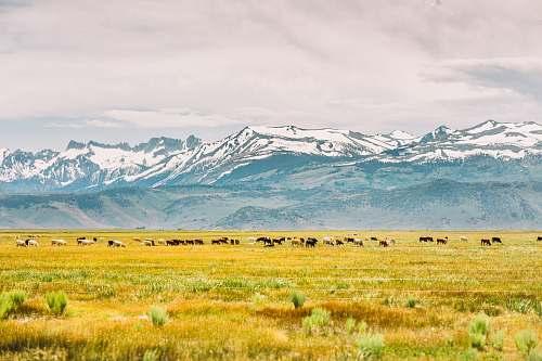 field mountain in front of field grassland