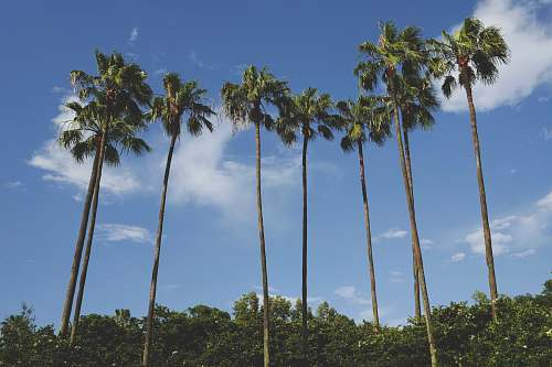 tree brown and green coconut palm trees under blue sky plant