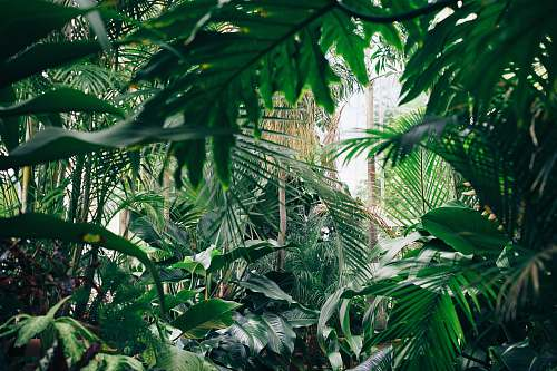 jungle area covered with green leafed plants nature