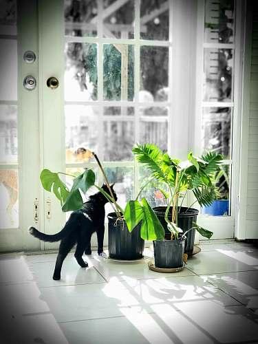 vase cat near plants potted plant