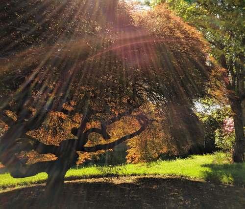 flare green-leafed tree light