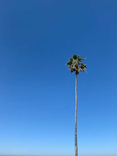 tree green palm tree under blue sky during daytime arecaceae