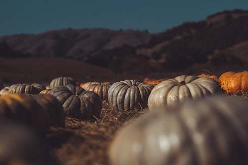 flora grey and orange pumpkins lying on the ground near the hills food