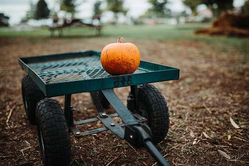 flora orange pumpkin on green metal trailer food