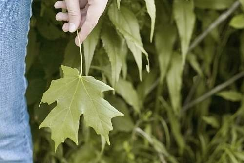 leaf photo of person holding green leaves saint louis park