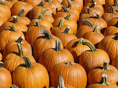 vegetable orange pumpkin lot flora