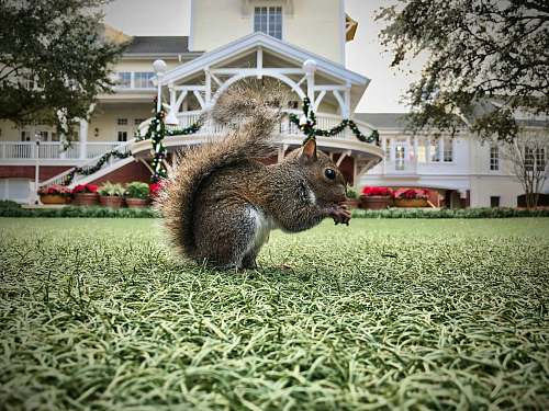 disney's boardwalk inn wildlife photography of red squirrel lake buena vista