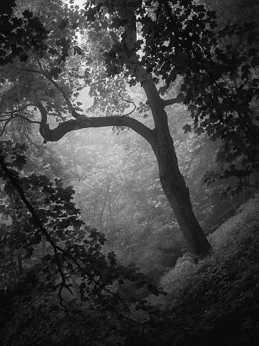 black-and-white grayscale photography of trees plant