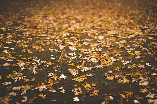 fall dried leaves on gray pavement blowing rock