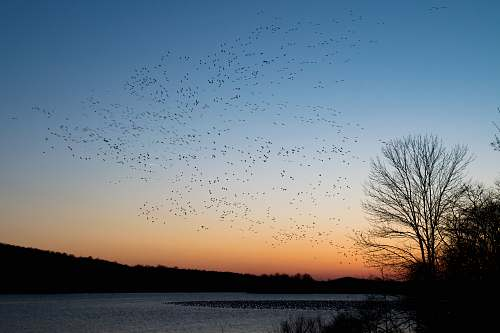 middle creek wildlife management area flock of bird flying during sunset stevens