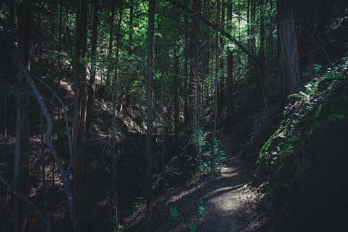 forest photo of forest walk path marron valley