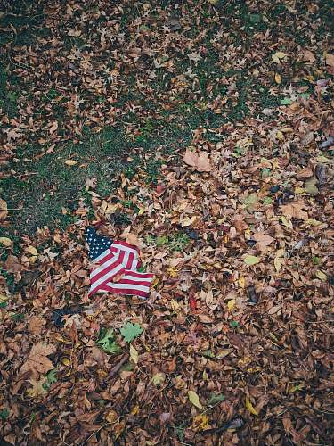 green-wood cemetery USA flag on brown leaves soil