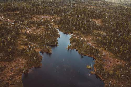 outdoors aerial photography of lake surrounded with trees at daytime ketchikan