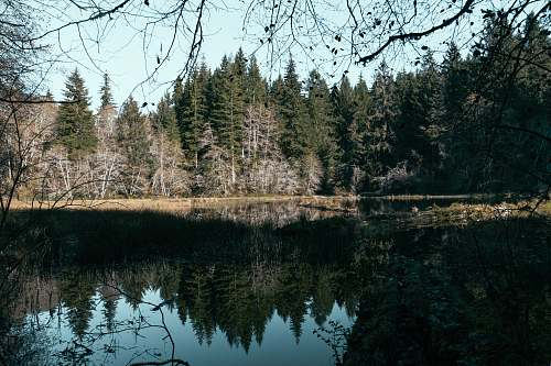abies trees beside body of water during daytime fir