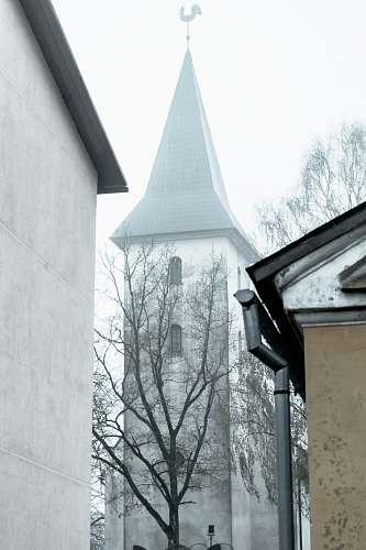 spire bare tree beside a gray concrete church building