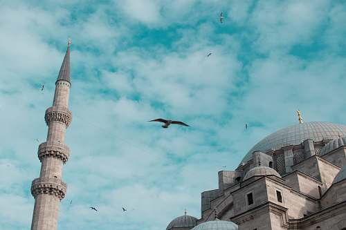 building birds flying above mosque during daytime dome