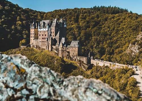 building caste facing tree castle