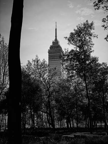 building grayscale photography of high rise building black-and-white