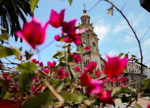 building pink-petaled flower tower