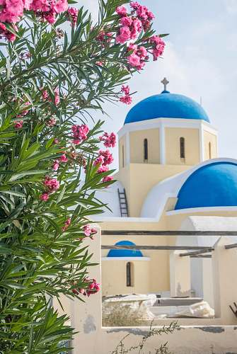 building pink petaled flowers dome