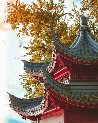 building shallow focus photo of red building pagoda