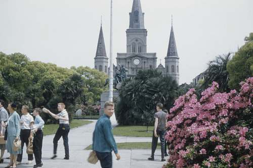 architecture people walking near pink-petaled flower spire