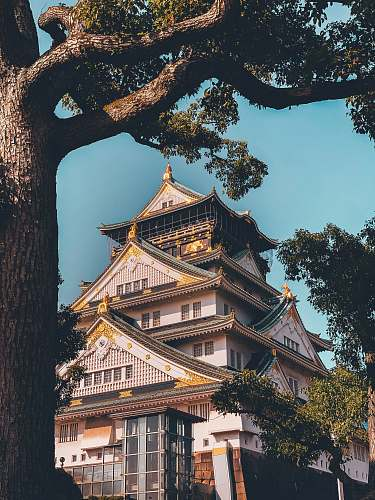 architecture white and black Japanese Castle pagoda