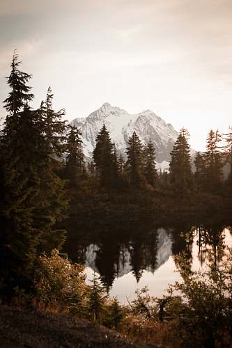 conifer snow covered mountain fir