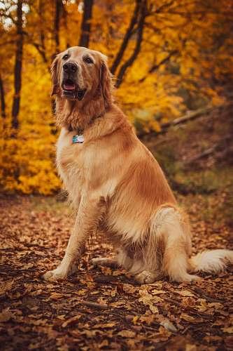 pet  canine