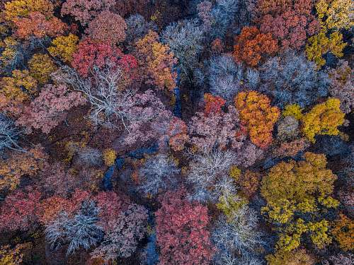 nature aerial photo of forest during the fall ocean