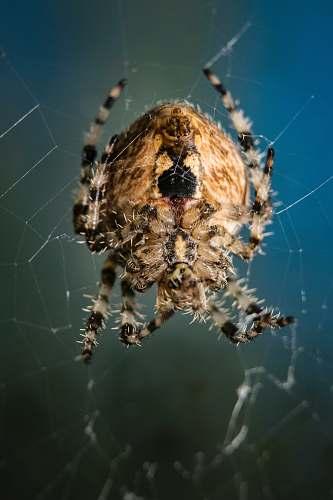 spider beige and black spider arachnid