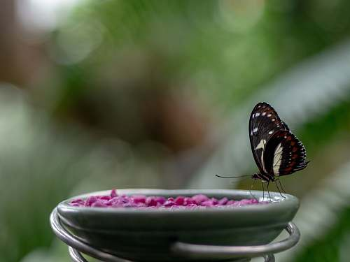 bee black and brown butterfly perched on green ceramic bowl in closeup photography honey bee