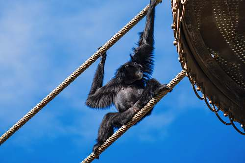 wildlife black monkey on brown wooden boat under blue sky during daytime ape