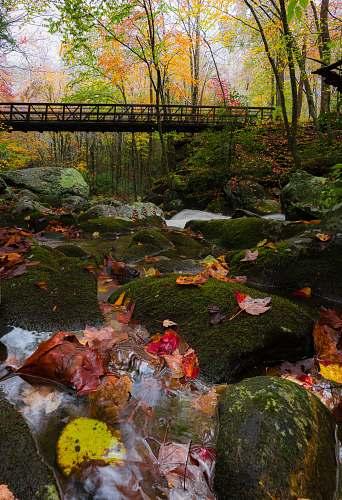 carp bridge beside green leaf trees fish