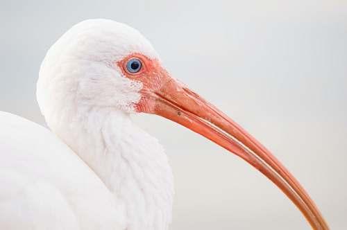 bird depth photography of white bird with long nose beak
