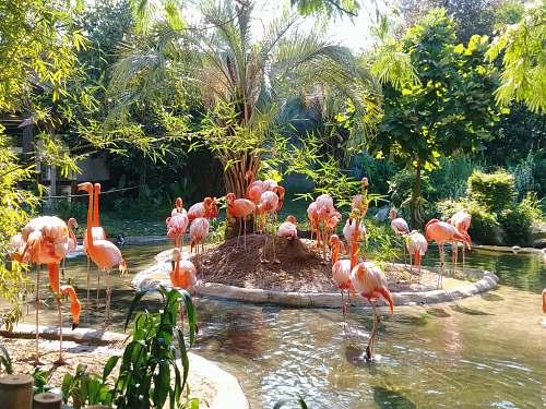 flock flamingo on pond columbia