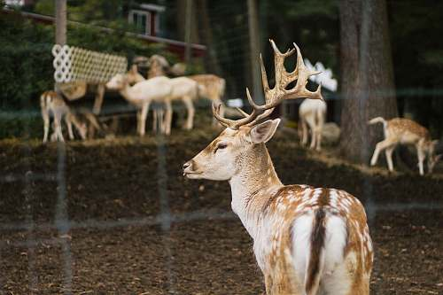 mammal group of deer wildlife