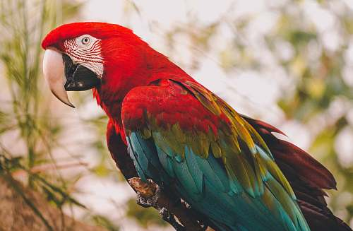 bird red, blue, and green bird on tree in close-up photography macaw