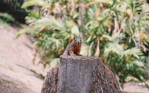 squirrel selective focus photography of brown squirrel mammal