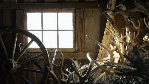 barn beige and brown deer antlers stacked near brown wooden carriage wheel inside room at daytime lewistown