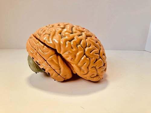 clothing human brain figurine plant