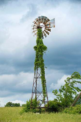 flora black and gray windmill with vine plants palm tree